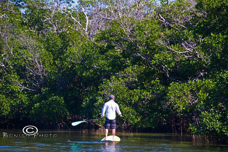 Paddling into the Mangroves - Mellow Ventures Key West - Photo by Pat Bonish