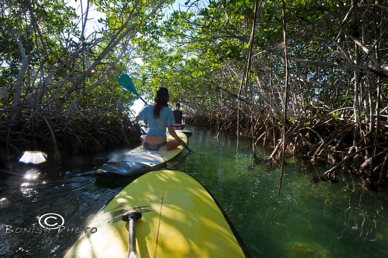 Paddling through the Mangroves is the best way to explore the islands - Mellow Ventures Key West - Photo by Pat Bonish