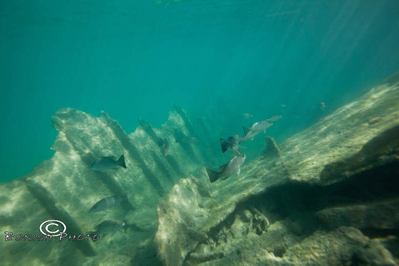 Whats left of a ship wreck - Mellow Ventures Key West - Photo by Pat Bonish