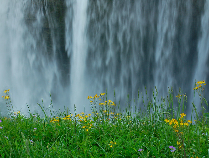 Flowers in front of Middle Falls at Letchworth State Park