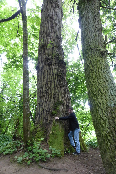 Mike - tree hugger