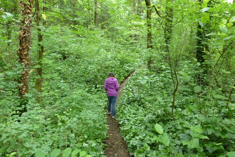 Walking the forest trail in Memorial Park