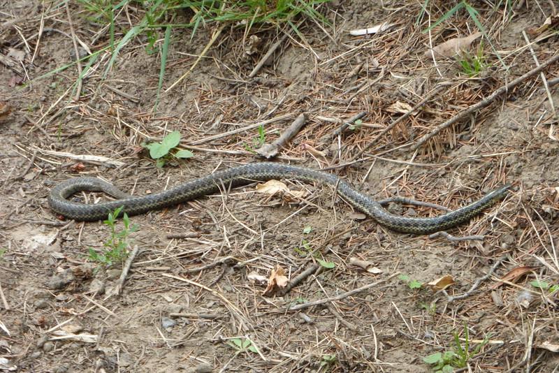 Snake!!!!! whew... it wasn't alive.