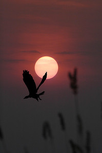 _DSC6971-4x6-w-bird