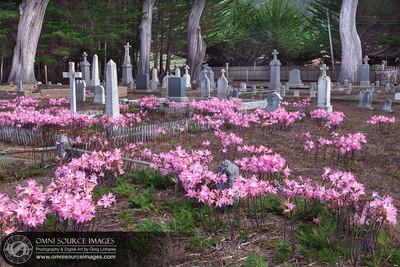 Cuffey's Cove Cemetery. Hwy 1, Mendocino County, CA.