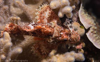 Mermaid komodo Indonesia Night Dives