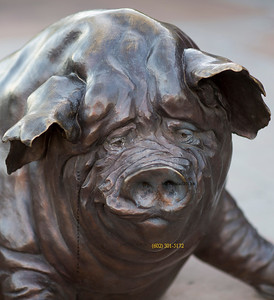Bronze Pig on Main 4216