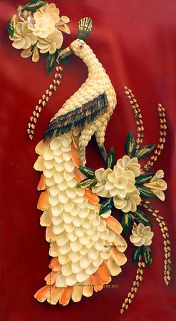 shell peacock 4037