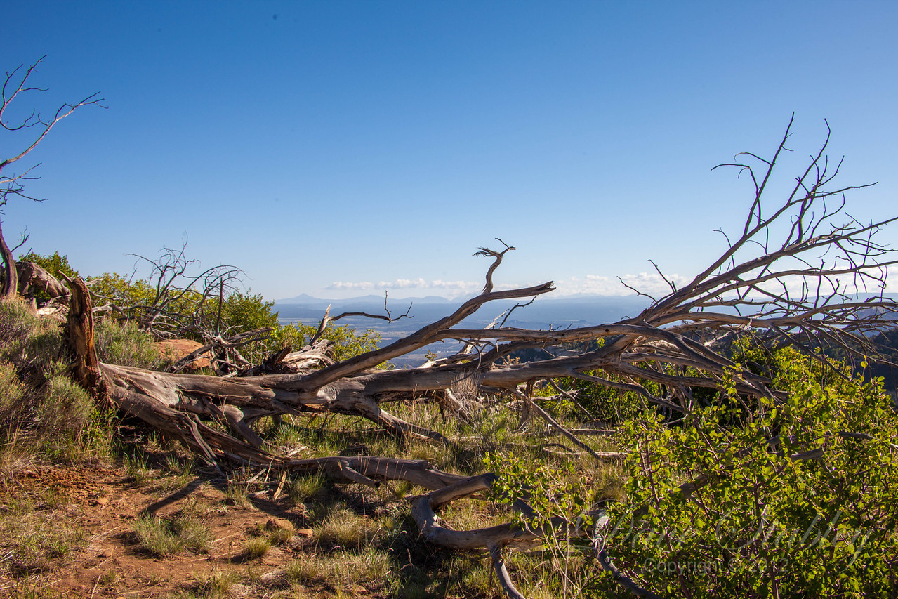 Mesa Verde Landscapes-3315