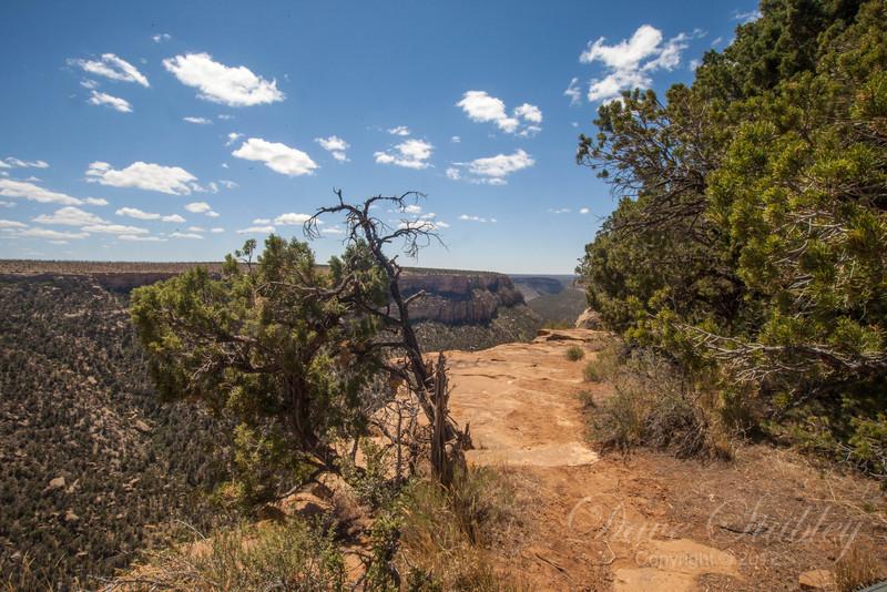 Mesa Verde Landscapes-3473