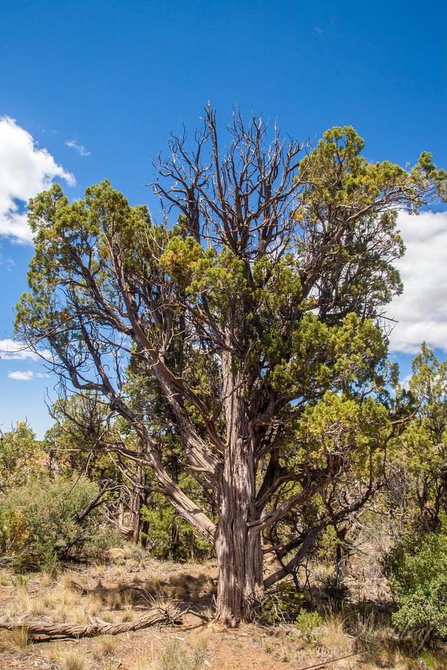 Mesa Verde Landscapes-3491