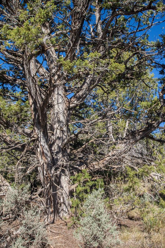 Mesa Verde Landscapes-3370