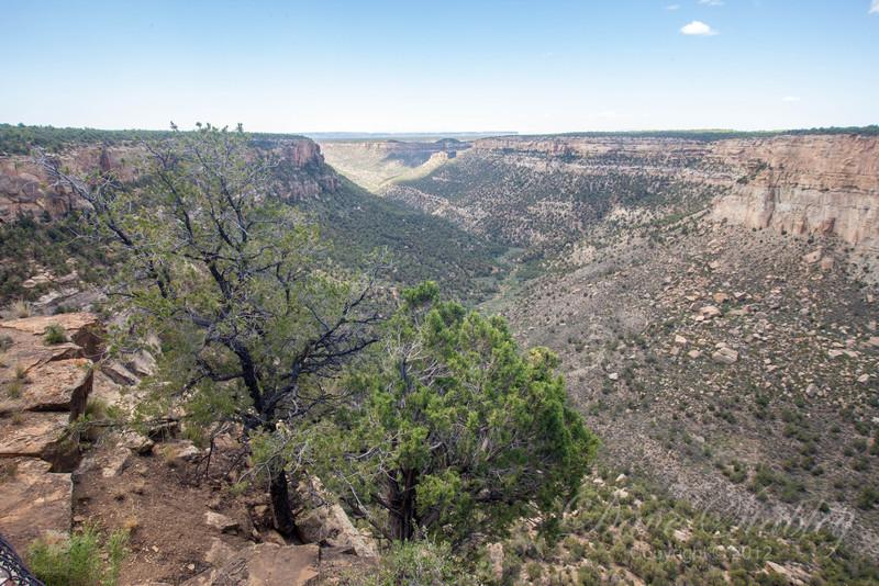 Mesa Verde Landscapes-3483