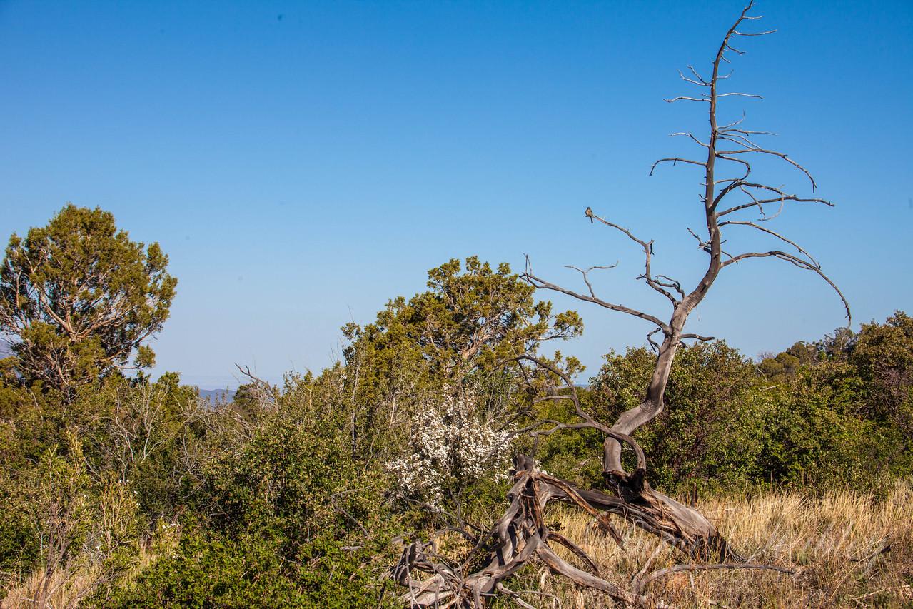 Mesa Verde Landscapes-3317
