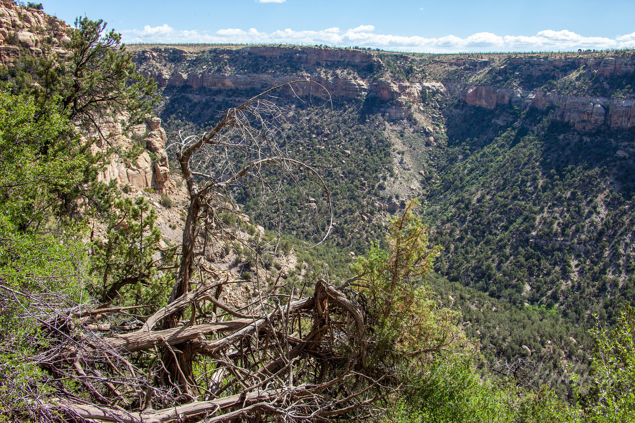 Mesa Verde Landscapes-3388