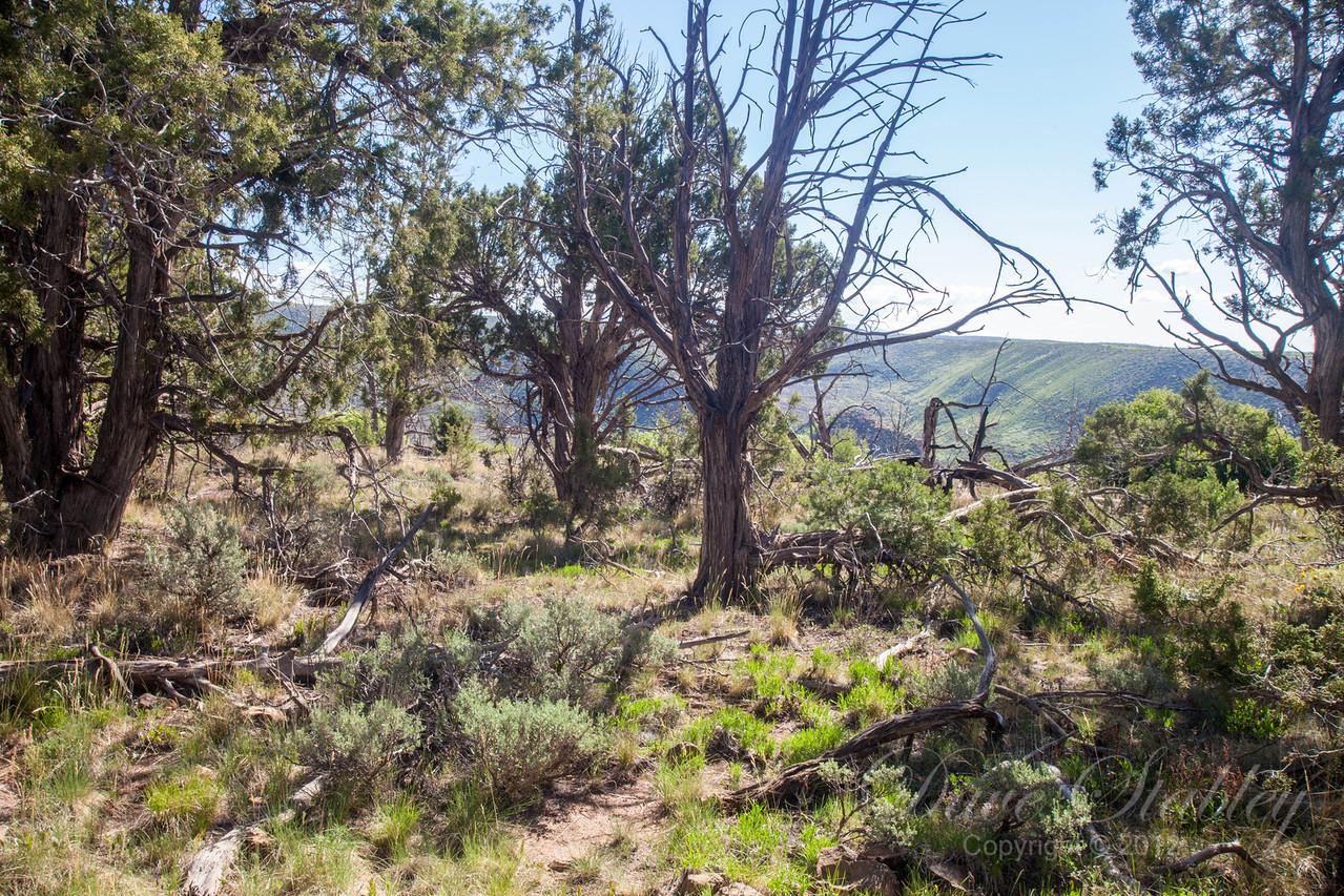Mesa Verde Landscapes-3369