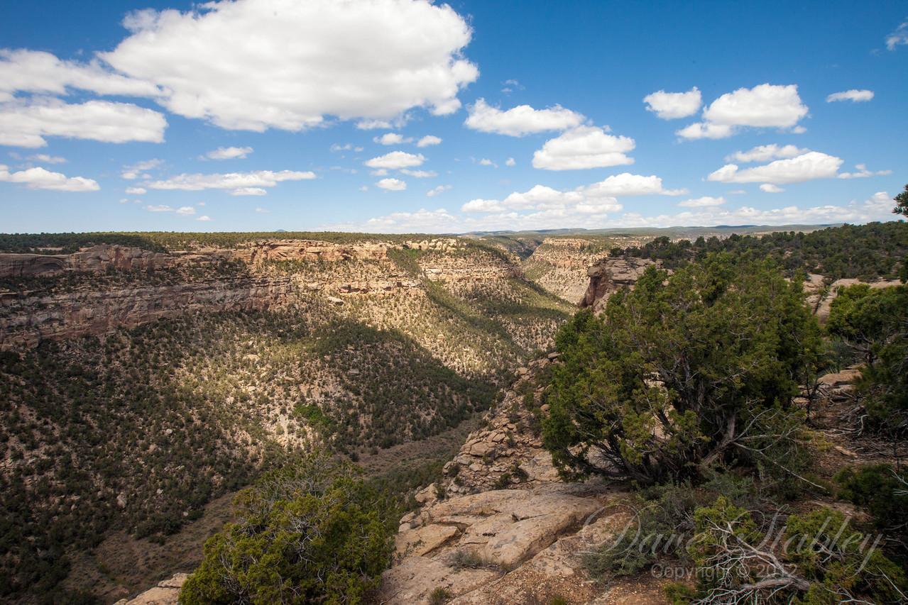 Mesa Verde Landscapes-3487