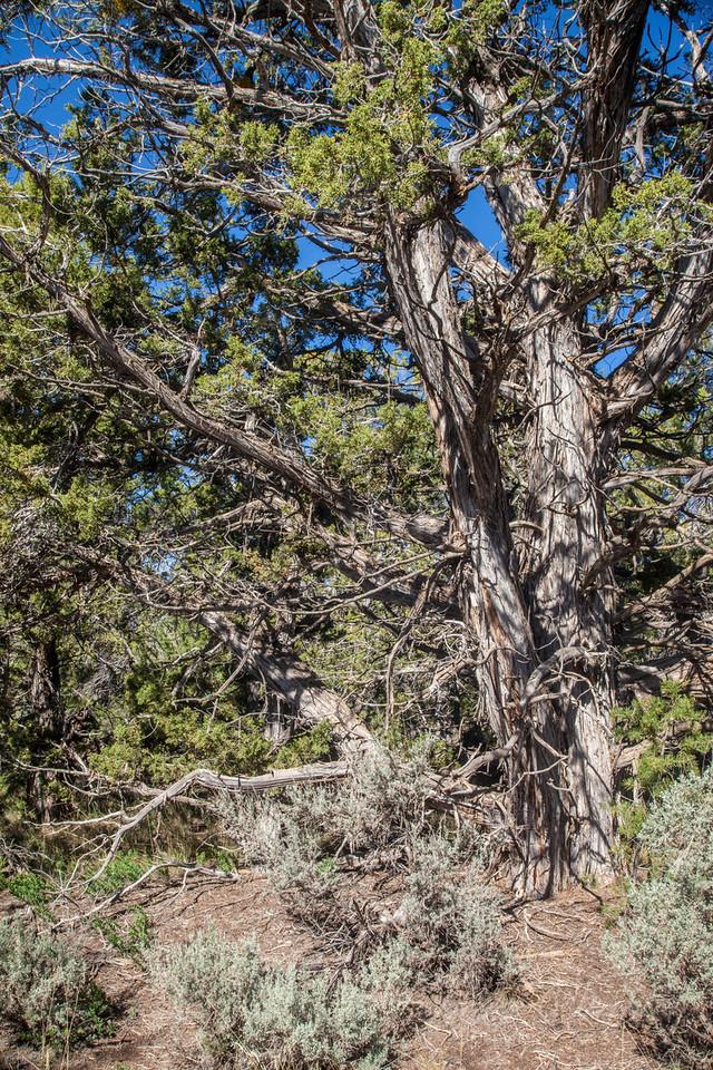 Mesa Verde Landscapes-3371