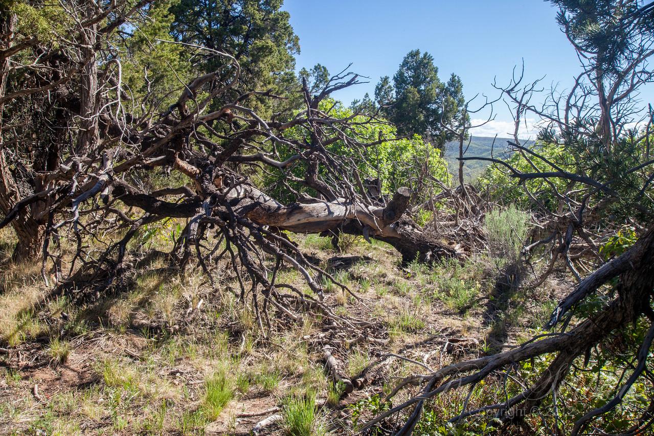 Mesa Verde Landscapes-3372