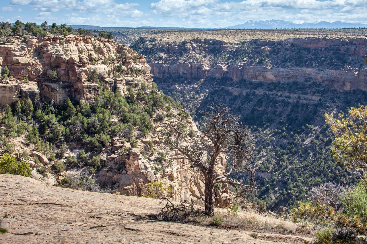 Mesa Verde Landscapes-3386
