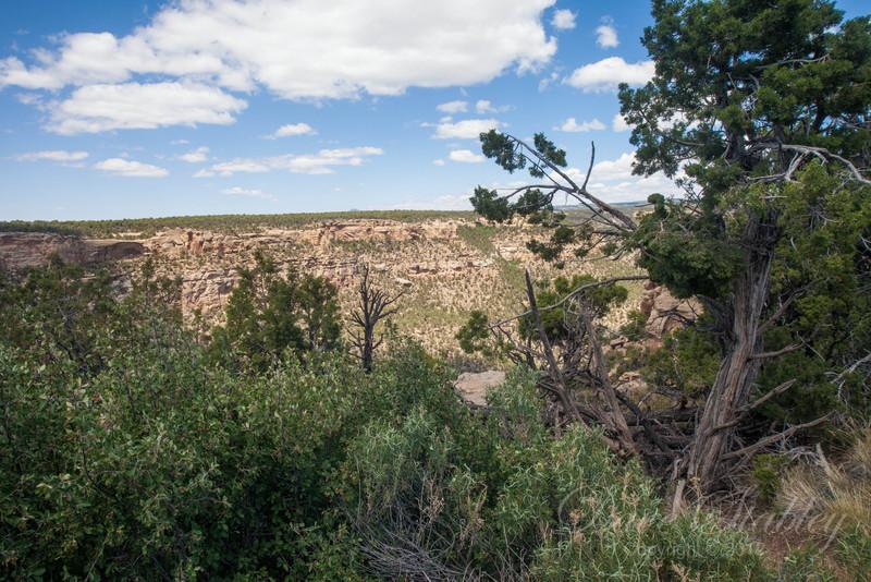 Mesa Verde Landscapes-3490