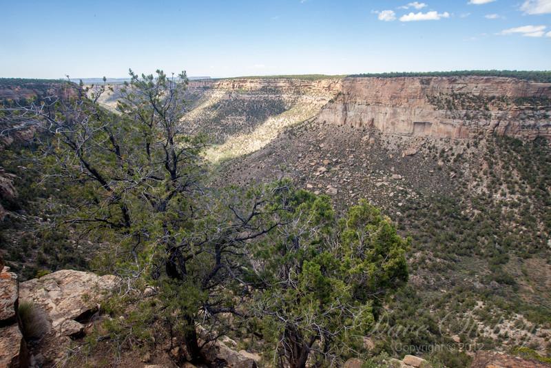 Mesa Verde Landscapes-3489