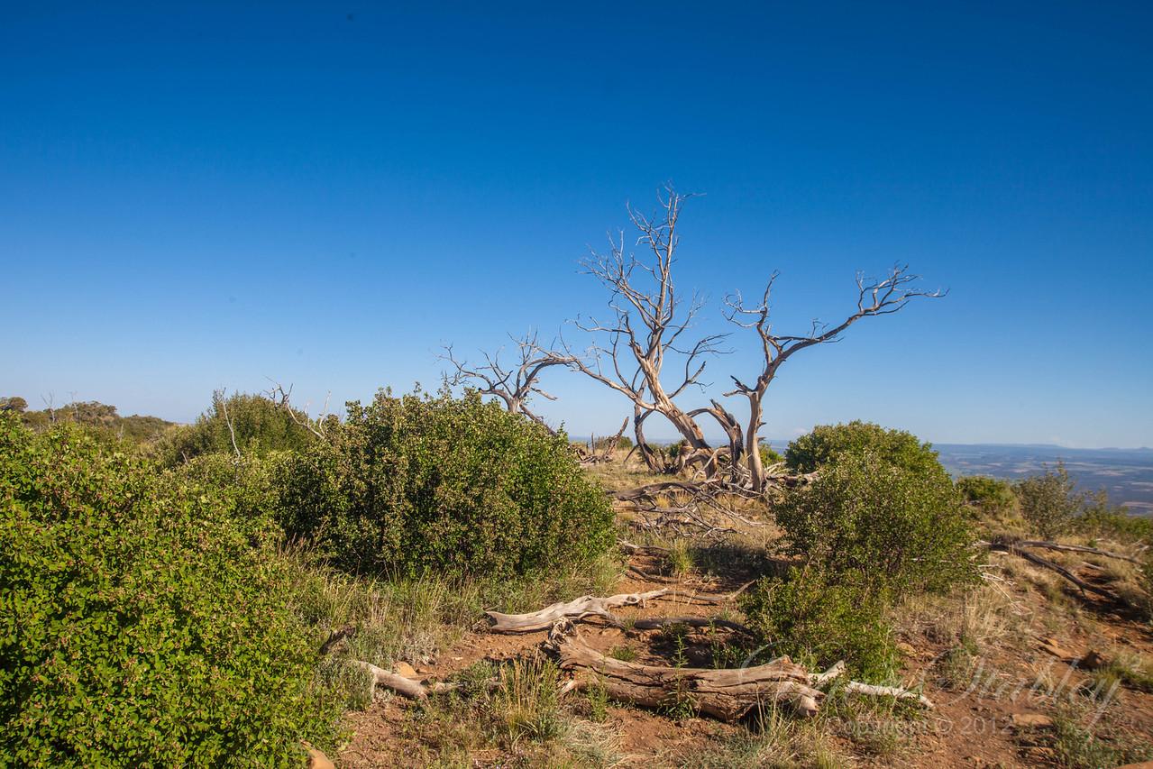 Mesa Verde Landscapes-3324