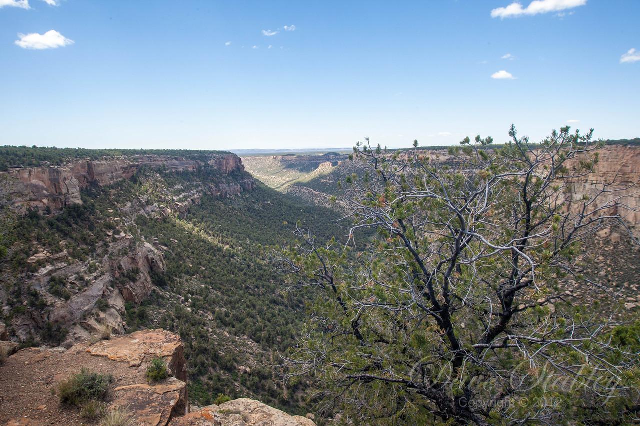 Mesa Verde Landscapes-3484