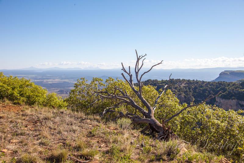 Mesa Verde Landscapes-3320