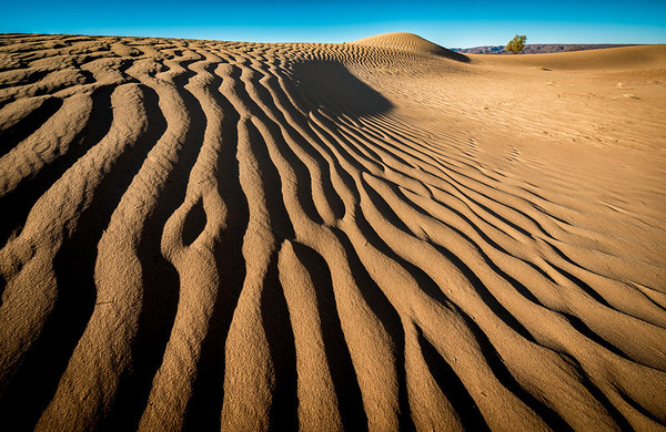 Striking patterns in dunes of the Sahara Desert