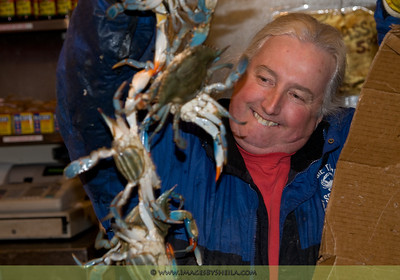 Vendor at the DC Marina admiring and showing off his crabs.