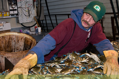 The infamous Chesapeake Bay blue crabs right at the Marina DC Waterfront.