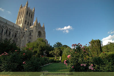 The garden at the Washington National Cathedral.
