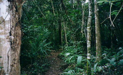 Walking through the jungle to get to Coba, Mexico.