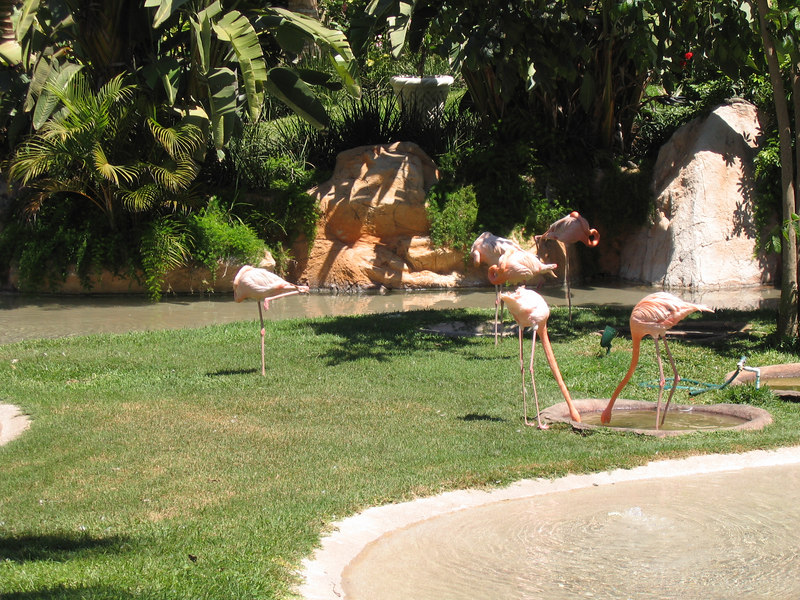 Mazatlan -- Pueblo Bonito resort. Real flamingos.