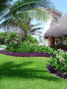 Iguana and gardens