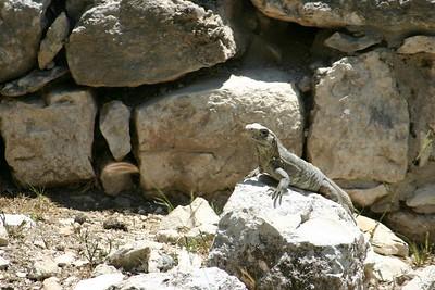 Basking in the sun, Chichen Itza