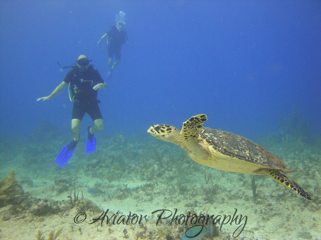Alex and I treading water and watching one of the many turtles we encountered.<br /> <br /> Photos courtesy of Gaby from Scuba Aquatic.