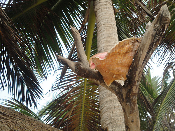 Conch shower - didn't actually try it
