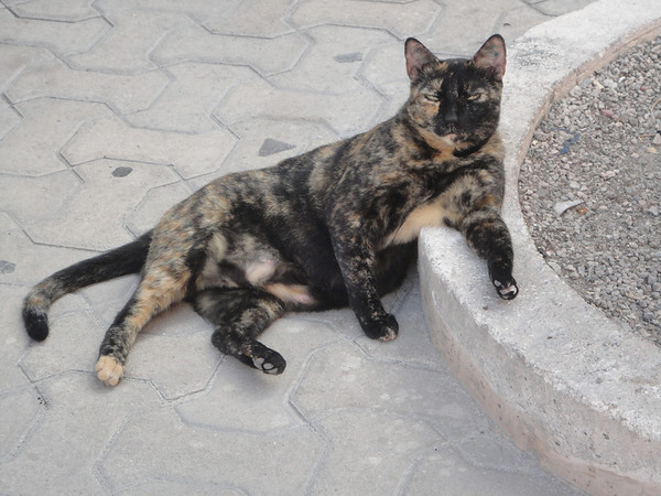 Lounging cat - they should probably rename Isla Mujeras to Isla de Gatos!