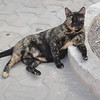 Lounging cat - they should probably rename Isla Mujeras to Isla de Gatos!