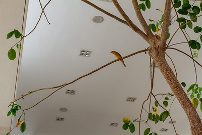 Flycatcher in the Lobby