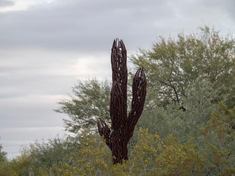 Inside the cactus