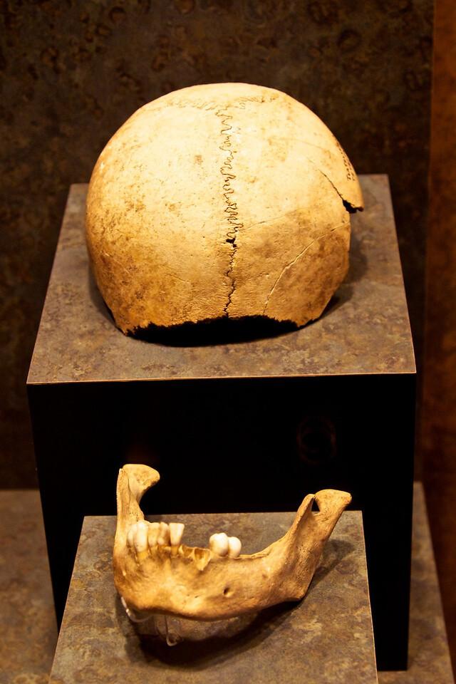 Corresponding skull with cut marks.