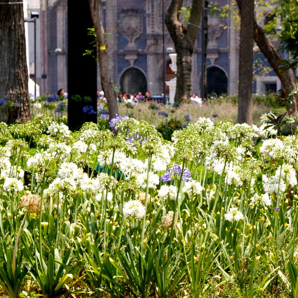 Flowers at Alameda.