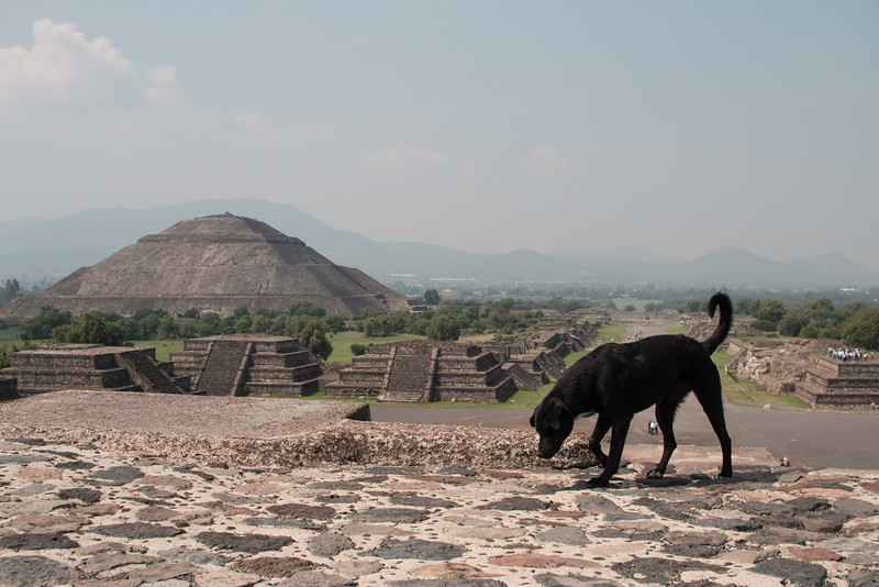 A dog explores the Temple of the Moon, Teotihuacan