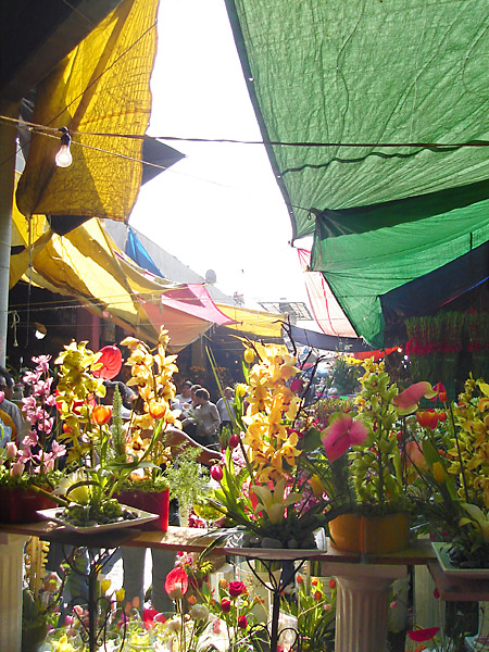 At the Jamaica Market. It was Mother's Day (celebrated on May 10) and Jamaica is the biggest flower market in Mexico City. Everybody has to get flowers for their mother on this day...