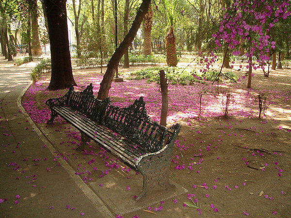 A small park in Coyoacan, near the Convento de Churbusco / National Museum of Interventions
