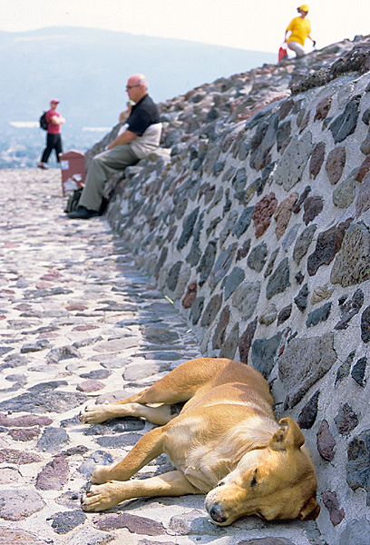 Perro de Teotihuacan
