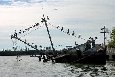 Pelicanos on a partially sunken ship